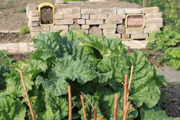 Nat rliche sch dlingsbek mpfung beispiel blattl use - Gartenarbeiten im mai ...