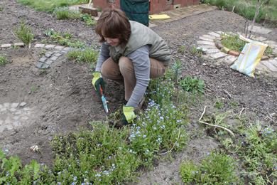 Gartenarbeiten mai wildblumen - Gartenarbeiten im mai ...